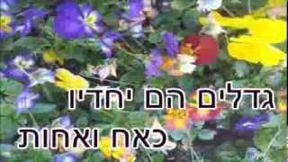 שיר עד - אמנון ותמר - בנימין אביגל | יוסף הדר |בביצוע מרים אביגל - Amnon ve'Tamar